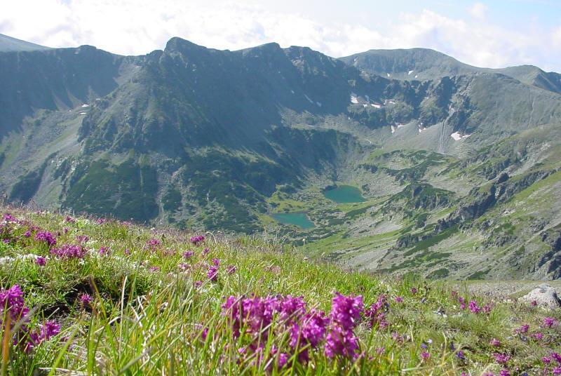 Mountain Flowers in Bulgaria